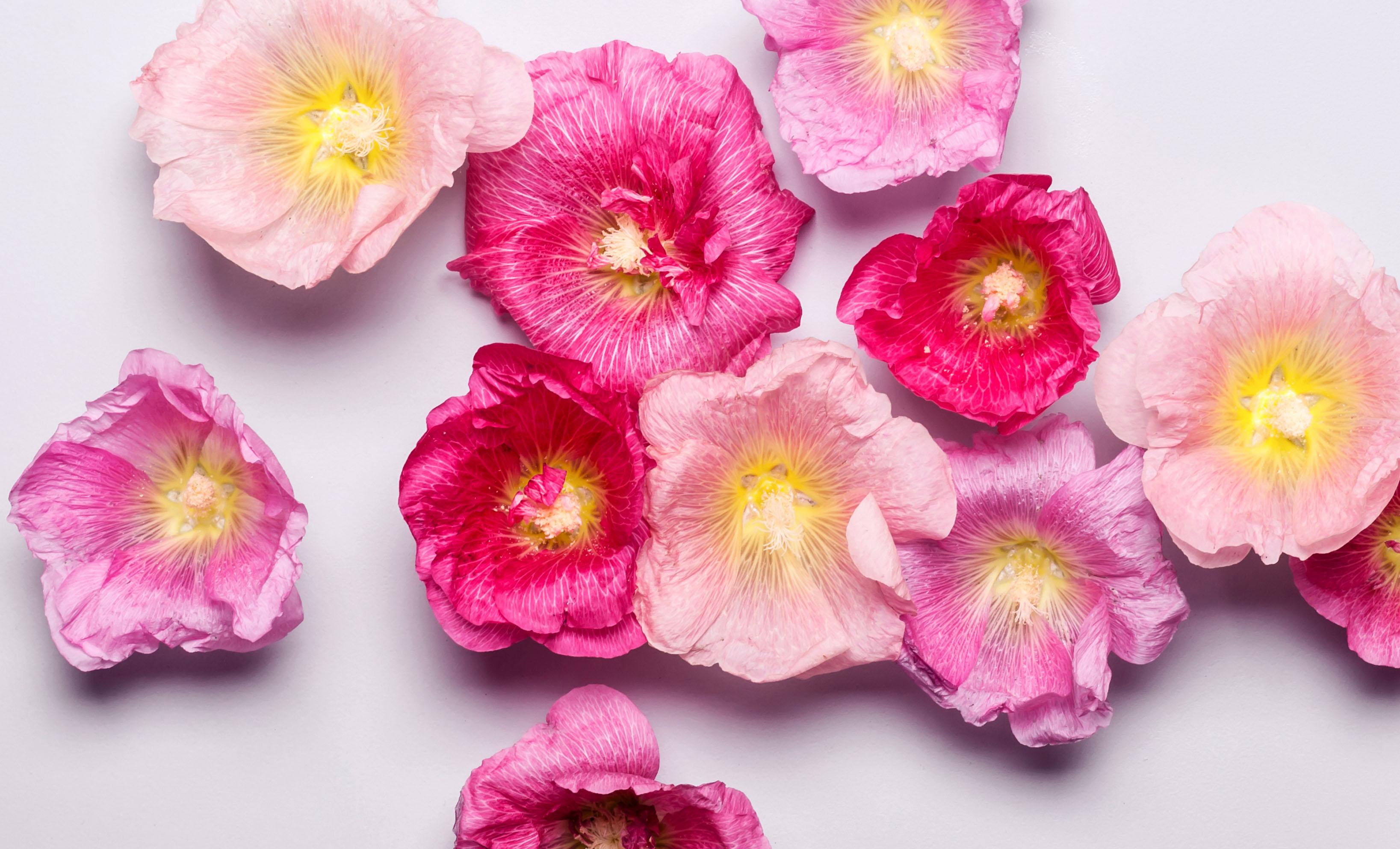 Nuty kwiatowe perfumy